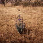 Guide: Où trouver Desert Sage dans Red Dead Redemption 2